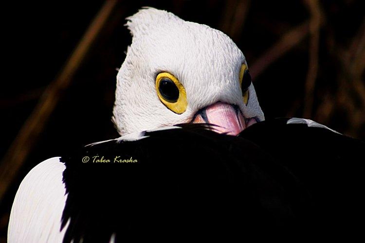 Colouryourdream Purpose Dream Goal photography animal bird