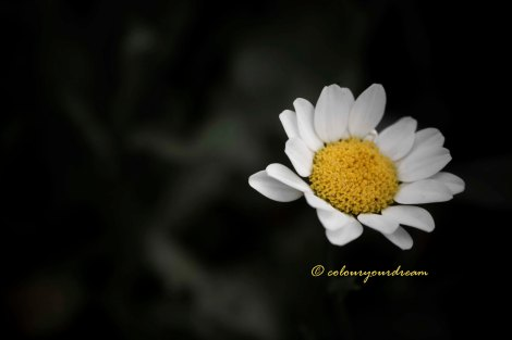 colouryourdream purpose goal dream prayer photography flowers
