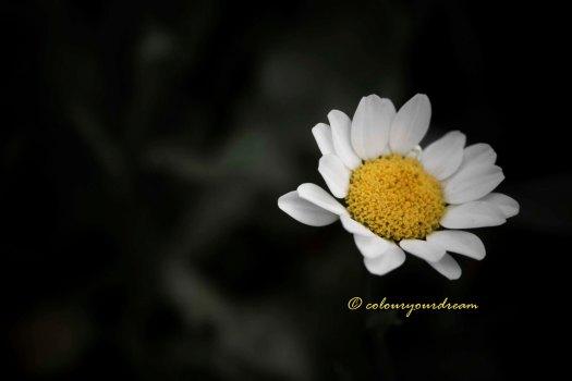 colouryourdream purpose goal dream prayer photography flowers