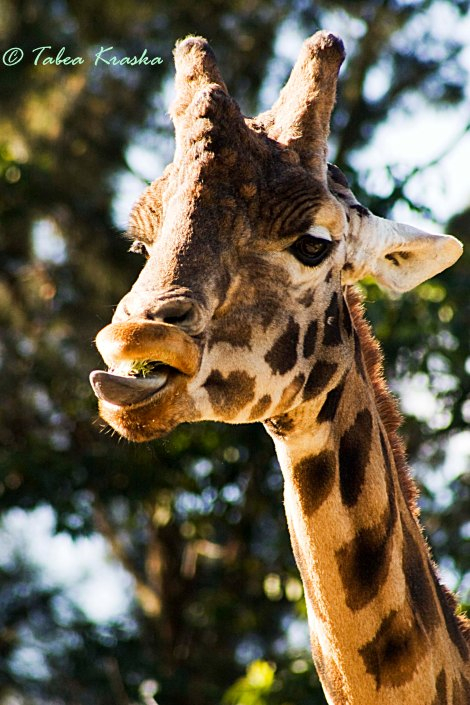 Colouryourdream Purpose Goal Dream photography animal giraffe