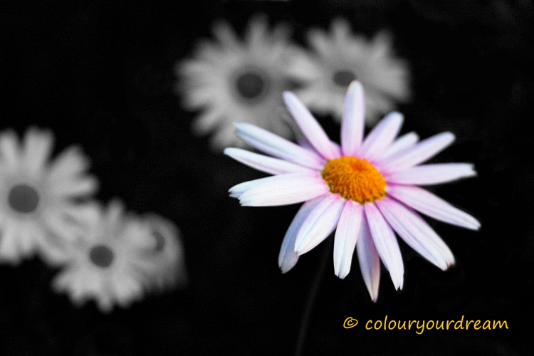 CRW_6963 flower